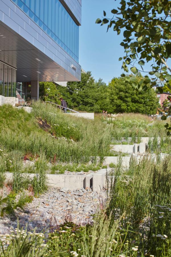 Stepped rain garden (photo: Riley Snelling Photography)